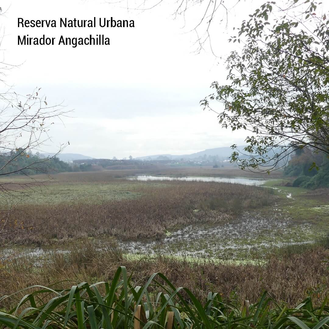 Santuario de la Naturaleza Humedal Angachilla