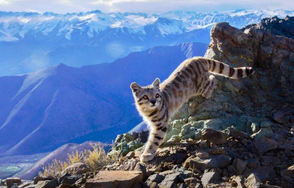 ¿Por qué necesitamos más áreas protegidas en la Zona Central de Chile?