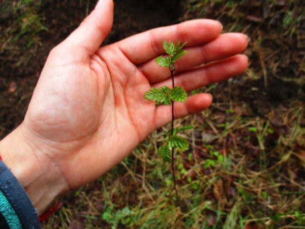 Fundación Plantae sembrando futuro